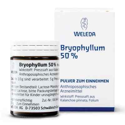 Bryophyllum 50% Pulver zum Einnehmen  bei apolux.de bestellen
