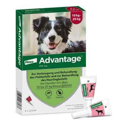 Advantage 250 für Hunde Lösung  bei apolux.de bestellen
